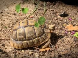 Schildkröten mit Frühlingsgefühlen Mini