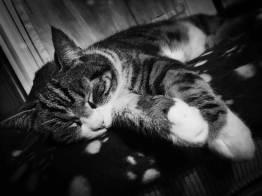 Vierbeiniger Begleiter Minou Schlafen