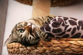Mitbewohner auf vier Pfoten – Katze spielt