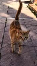 Mitbewohner auf vier Pfoten – Garfield