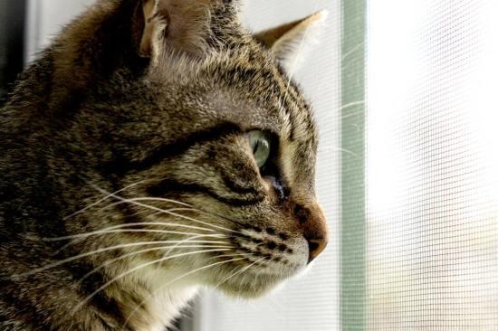 Tierische Begleiter Dafne Profil