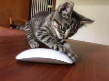 Tierische-Begleiter_Ronda__grosse-Maus