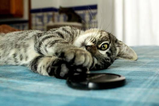 Tierische-Begleiter_Ronda__Noch-mehr-Spielen-auf-Tisch