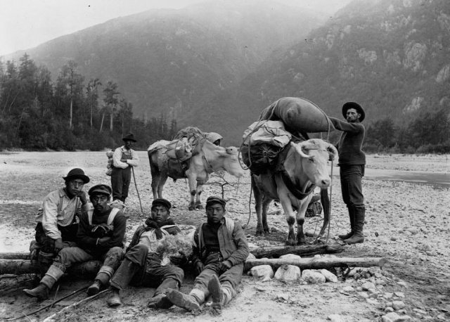 Five Chilkat porters pose with a miner and two oxen on the Dyea Trail, located at the head of the Chilkoot Trail, 1897.