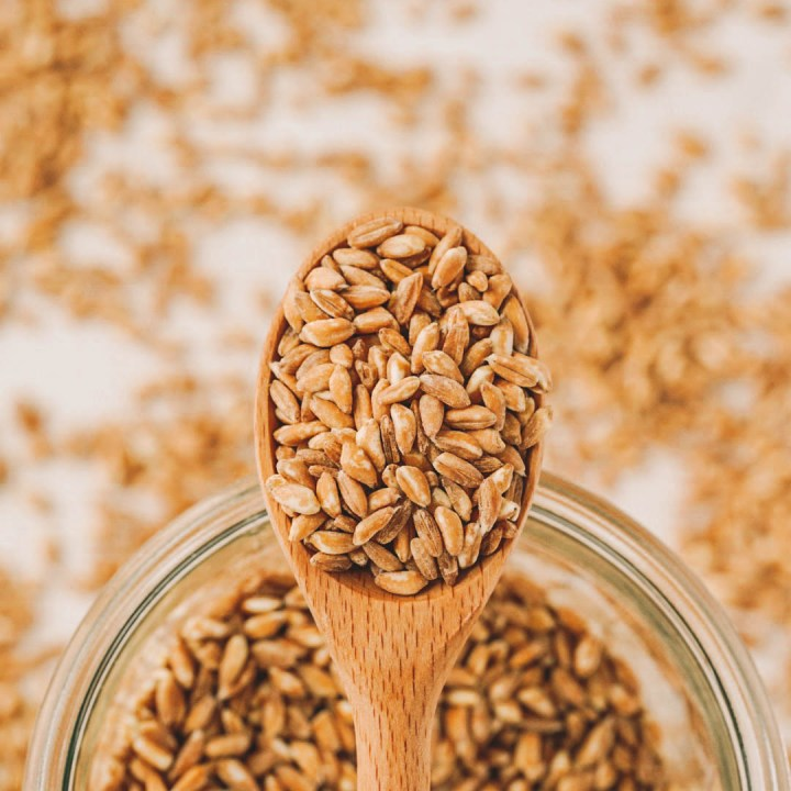 wooden spoonful of uncooked farro