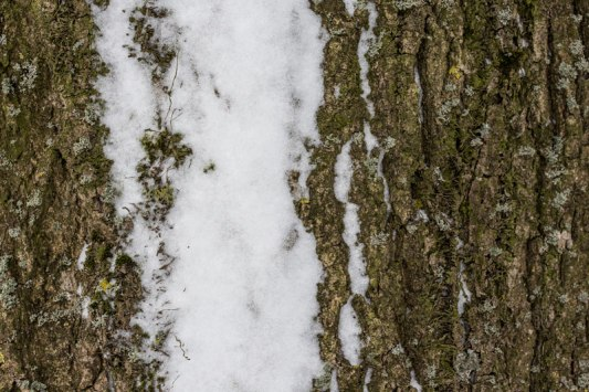 arbre-et-neige-4