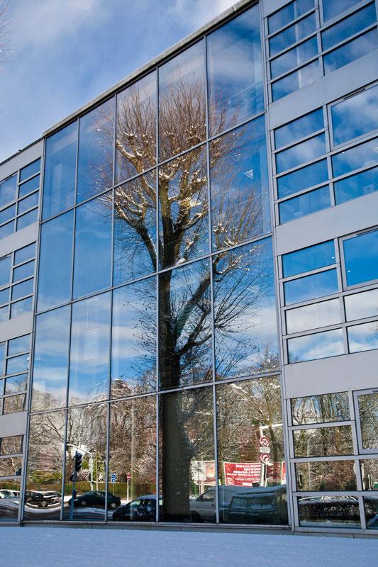 Un-arbre-en-ville-002