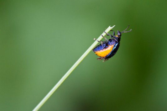 Insecte-macro-Zeeland-002