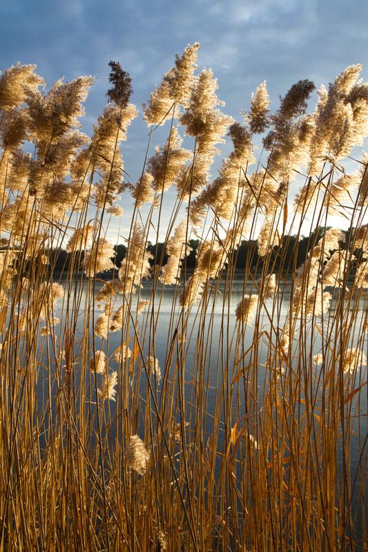 Lac-de-Rille-003