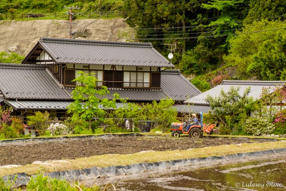 Japanese farming (see the hat)