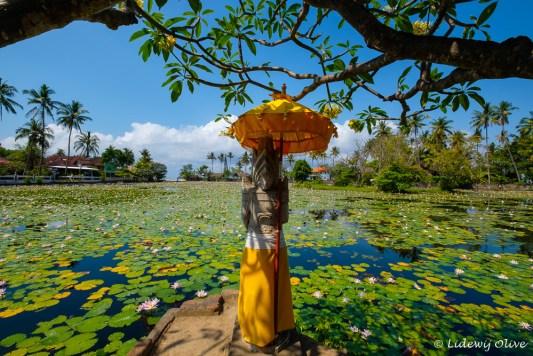 Statue at the lotus lagoon