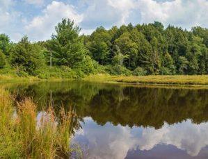 Byrne Hollow Farm Bog Trail image - Byrne Hollow Farm Bog Trail image