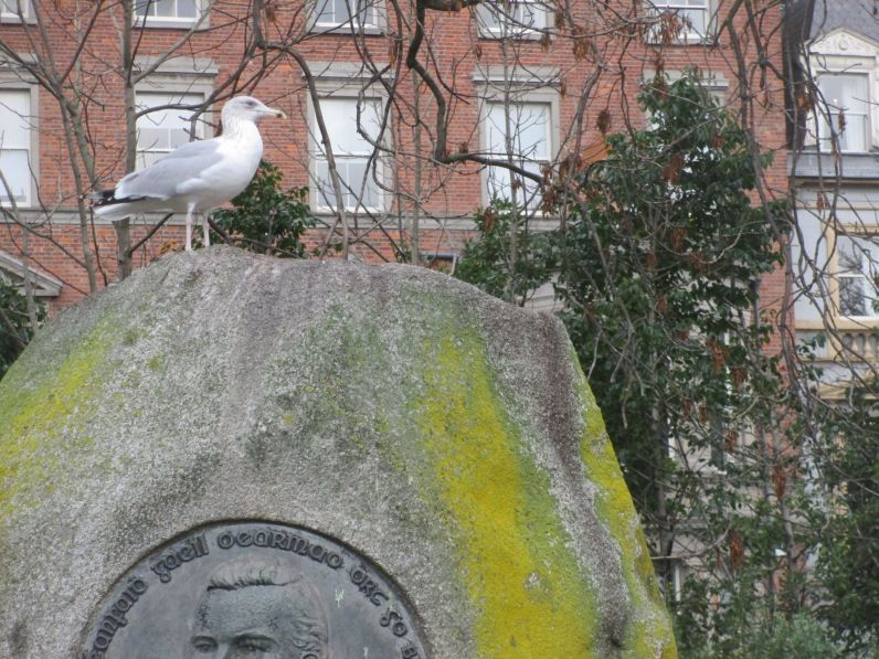 Seagulls hang out at St. Stephen's Green.