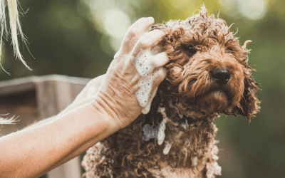 Hemp Collective Launches NEW Natural Pet Shampoo Bars