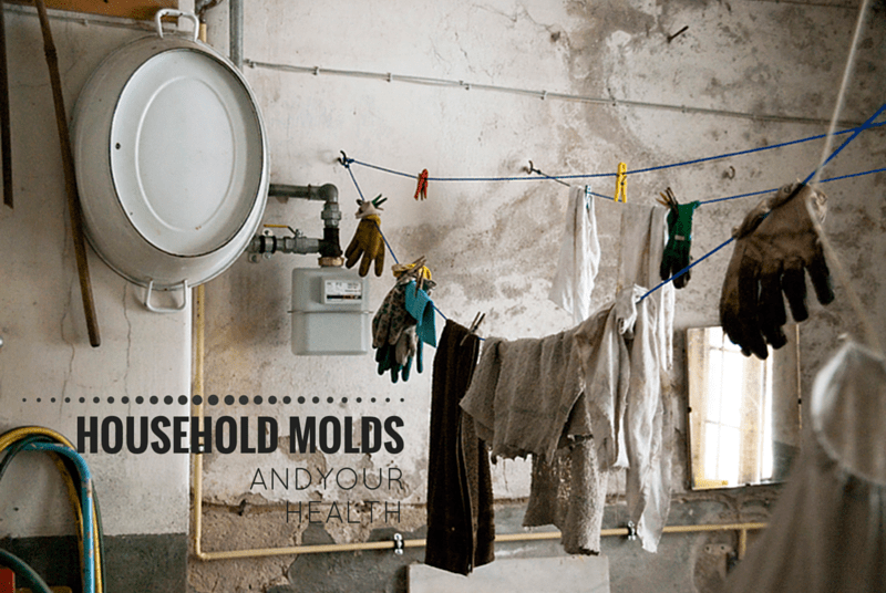 Common Household Moulds