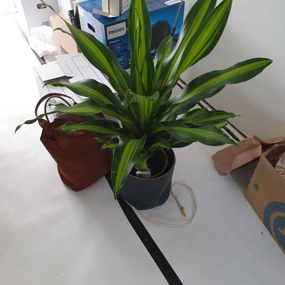 eerste plant gekocht