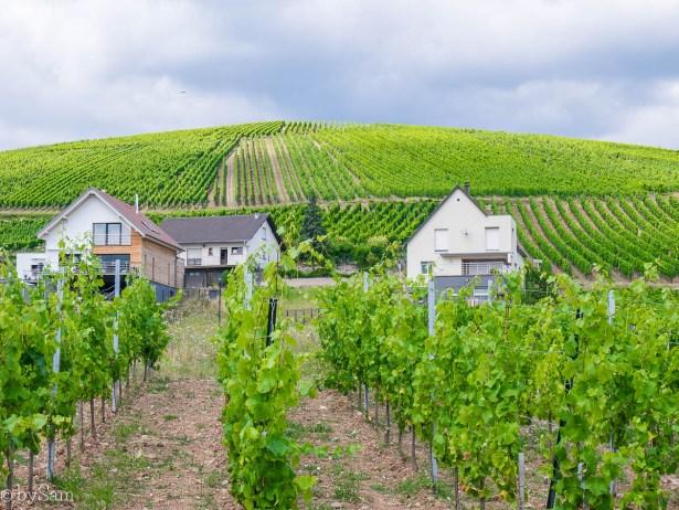 Wijnregio Alsace Frankrijk