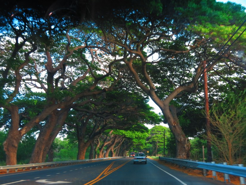 Hawaii by Road
