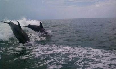 Dolphin fun on the Sanibel Thriller
