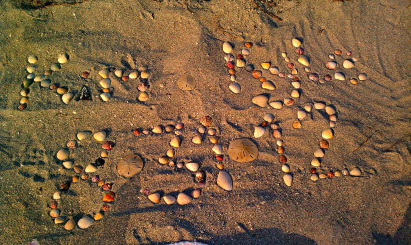 Seashells galore!