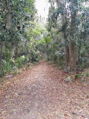 Wormsloe Wooded Path
