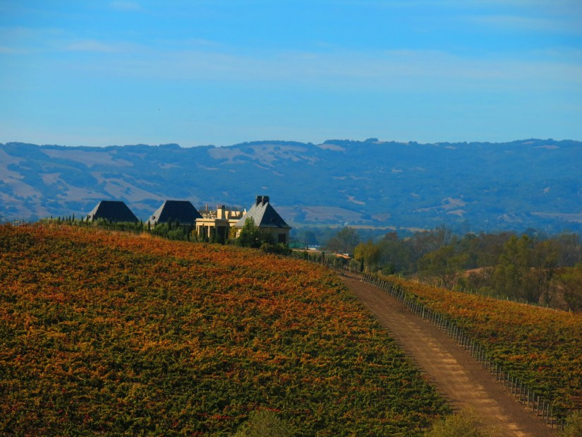 Approaching a vineyard in Napa Valley.