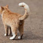 猫のしっぽの形