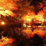 養老渓谷紅葉ライトアップ