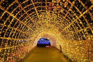 マザー牧場光のトンネル