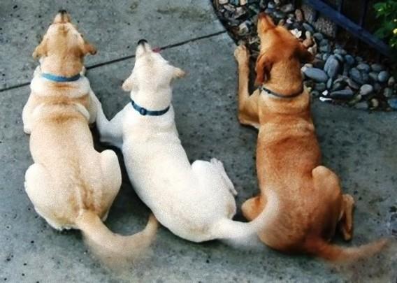 犬たちのしっぽ