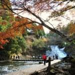 養老渓谷粟又の滝