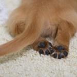 犬のしっぽ15
