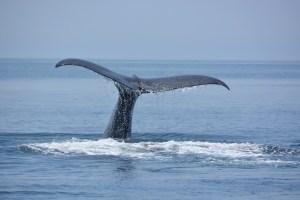 銚子マッコウクジラ