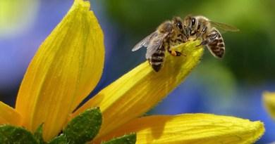 """Alto Adige Wild: """"A rischio il 41% delle specie animali, la biodiversità va difesa"""""""