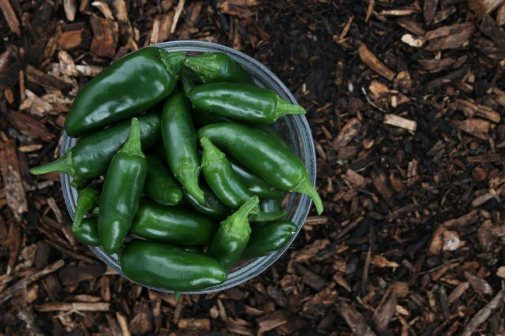 Les bases de permaculture pour son jardin