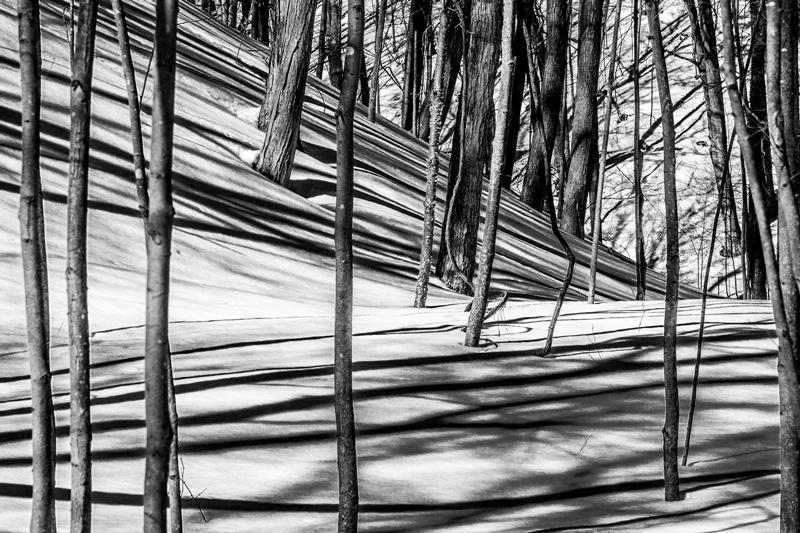 Tree Shadows Art Photograph by Bob Walma
