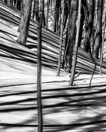 Tree Shadows Art Photograph by Bob Walma