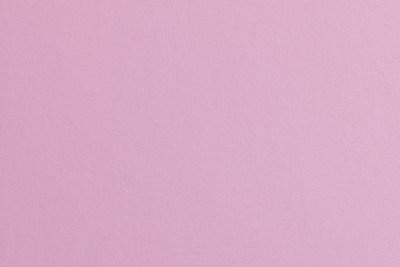 Plain Pink (14)