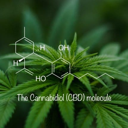 Green cannabis plant in background with structural model of cannabidiol molecule in white in foreground and the words