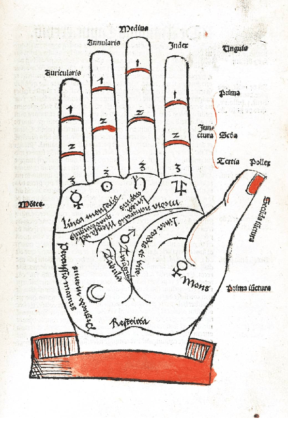 What Your Palm Lines Mean