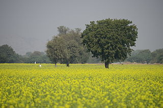The Mughal Empire reached dizzying heights of prosperity by providing safe havens in their crown lands to hardworking peasants. From here emerged the agricultural powerhouses of the Mughal Empire. Present day India is still mainly an agrarian economy.