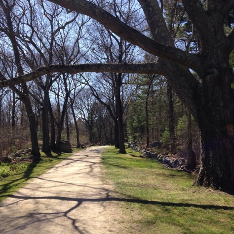 The Battle Road at Minute Man National Historical Site