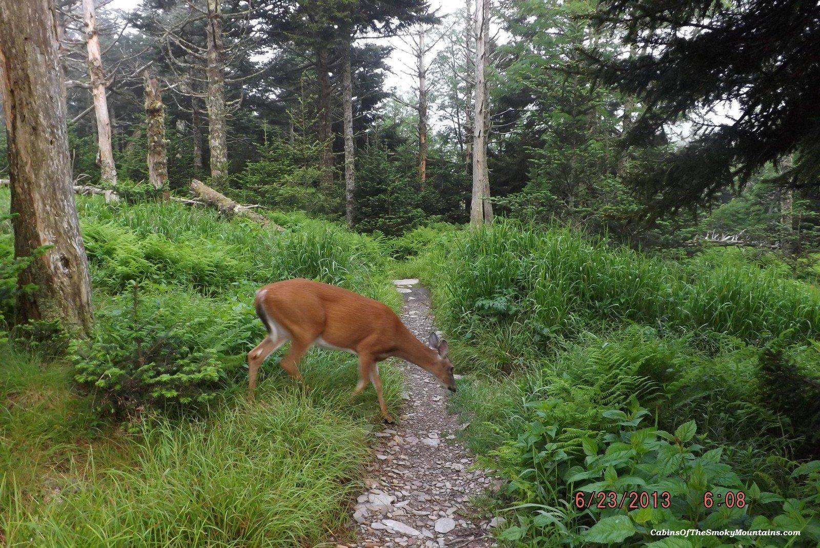 Easy hikes near gatlinburg · 1. Easy Walks In The Smoky Mountains
