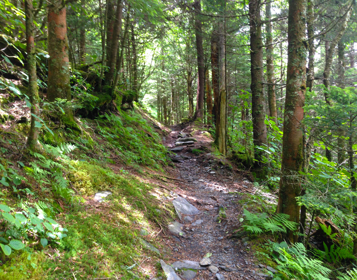 Dogs are also able to use this trail but must be kept on leash. The 5 Most Difficult Hiking Trails In The Smoky Mountains
