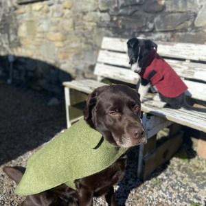 Herdwick Dog Items