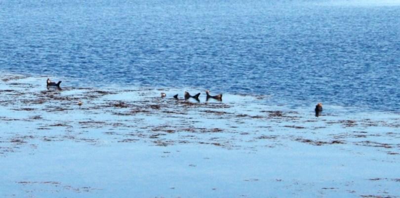 Focas nas Illas de Aran