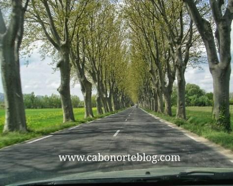carretera, francia, árboles
