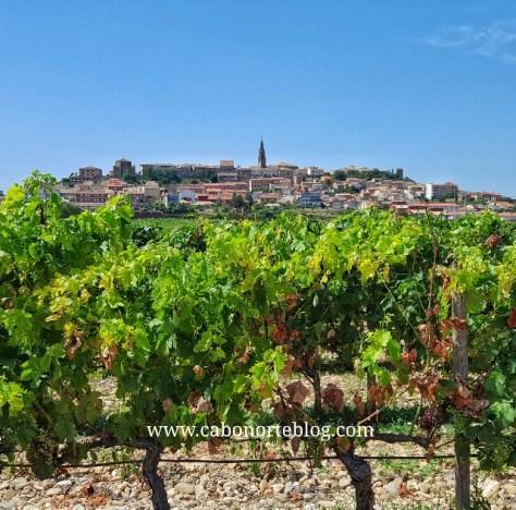 Rioja alavesa, viñedos