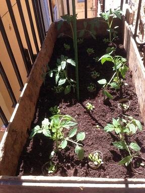 Faire Pousser Des Tomates En Pot