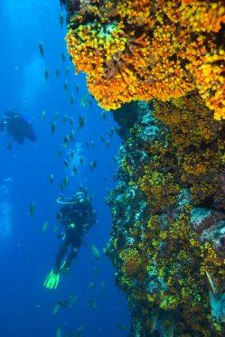 Cabo Verde serra negra _0048